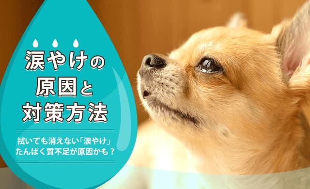 涙やけの原因と対策方法