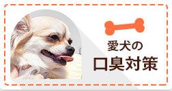 愛犬の口臭対策