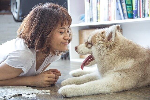 犬の顔を覗き込む女性