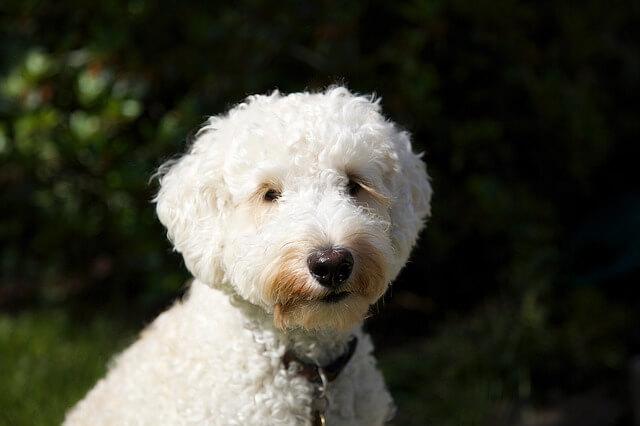 目元まで毛が伸びた犬