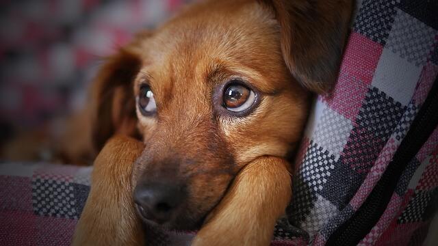 よそ見をする犬