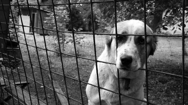 ケージの中にいる犬