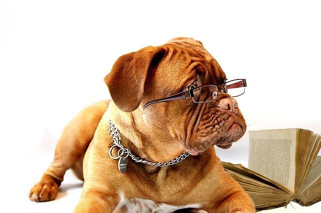 眼鏡をかけたブルドッグ