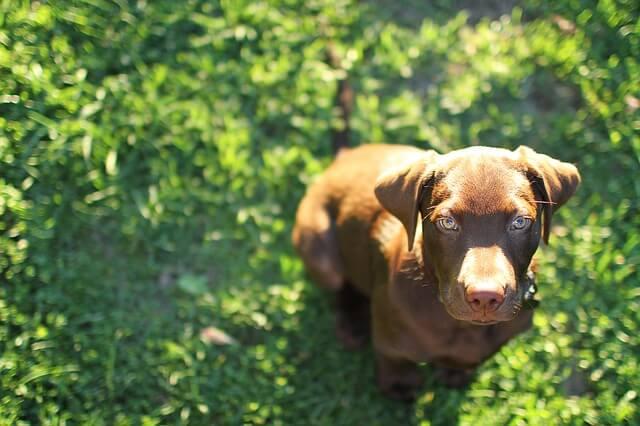 日差しを浴びる犬