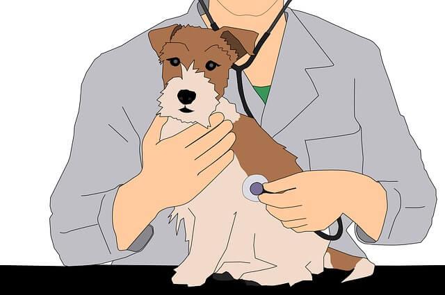 聴診器を当てる獣医