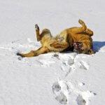 雪に背中を押し付ける犬