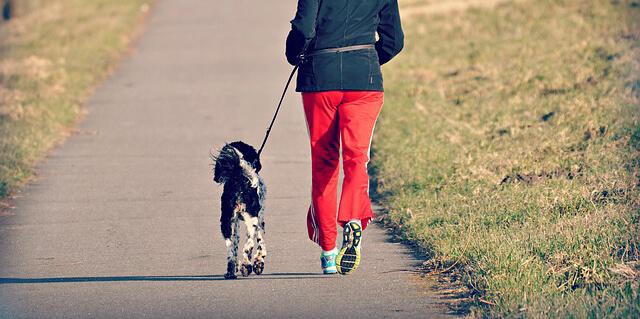 犬と飼主とでランニング