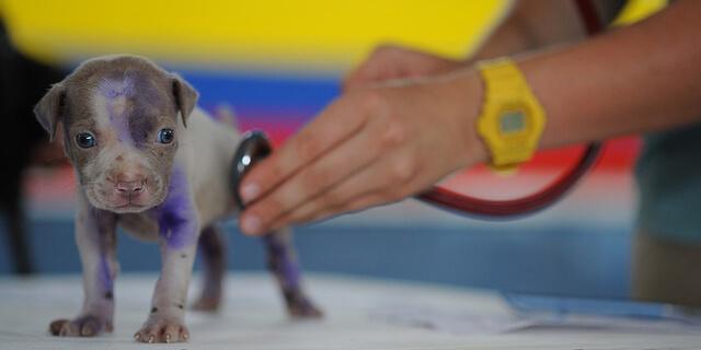 病院で診察を受けるペットの犬